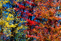 Yellow, Red, & Orange Fall Foliage