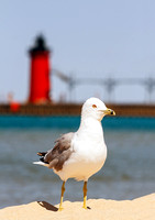 Seagul & South Haven Light
