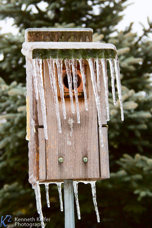 Birdhouse Icicles