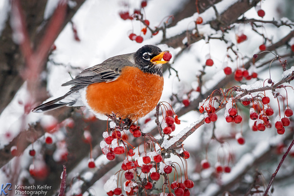 Kenneth Keifer Photography | Winter and Christmas Gallery