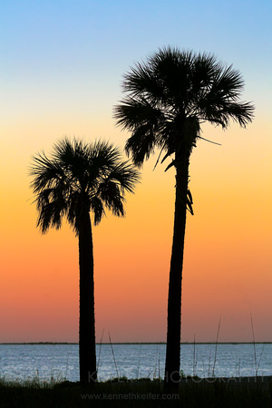 Silhouetted Palms at Sundown