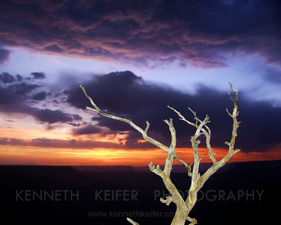 Snag at Sunset, Grand Canyon NP, Arizona