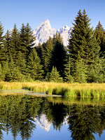 Schwabacher's Landing Reflection, Wyoming